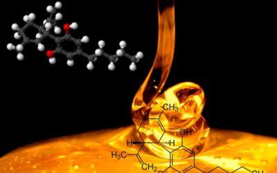 Cannabis medicinal y extracción de cannabinoides